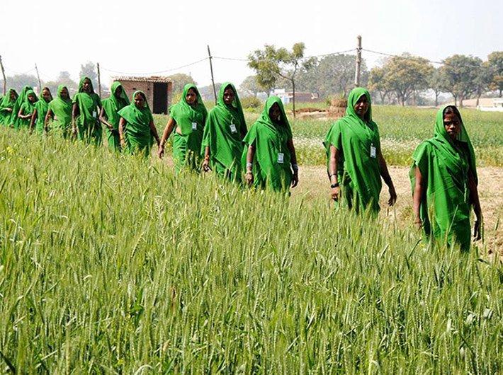 specail thik on green gang