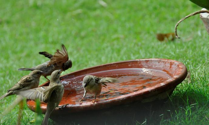 how to Help bird in summer
